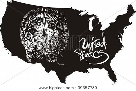 Opossum And U.s. Outline Map