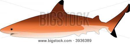 Sharkvector.Eps