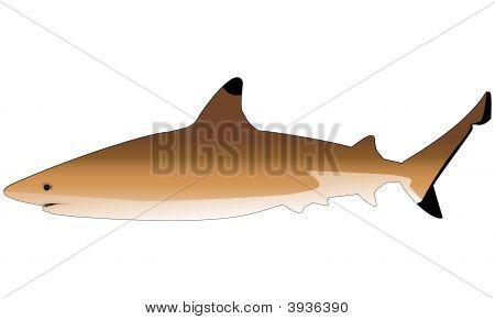 Sharkvector