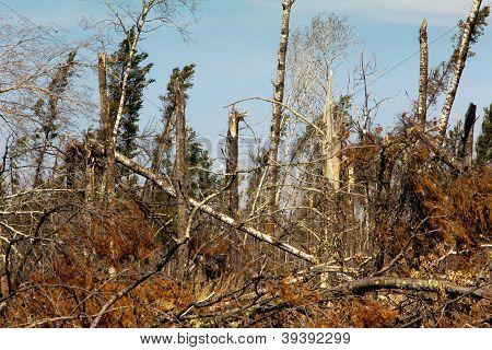 St. Croix State Park Wind Damage