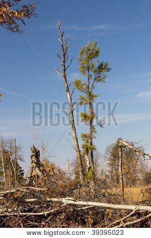 St. Croix State Park Wind Damage