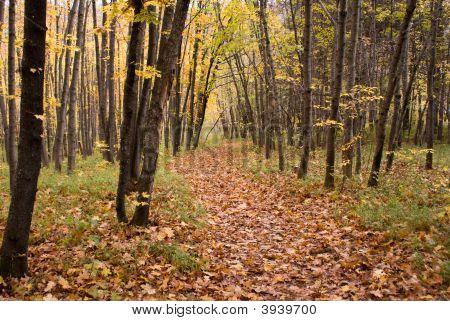 Trailway In Autumn