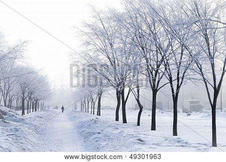 Foggy Wintry Morning In Saint-petersburg (russia). People Are Walking To Work On Snow-covered Avenue