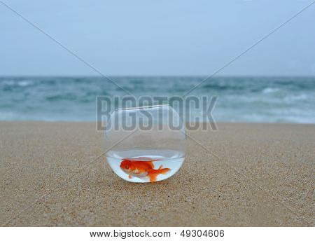 Gold fish in Sand beach with sea in background