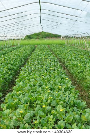 Greenhouse cultivation