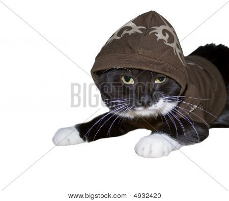 Cat With A Hoody