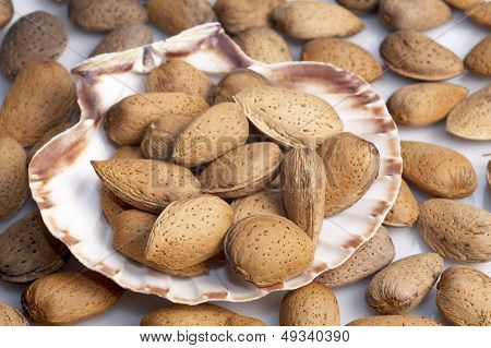 almonds in a shell
