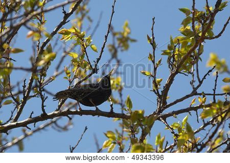 black bird on the branch of a tree
