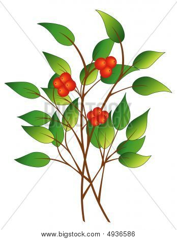 Tree Branch With Berries