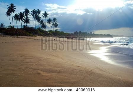 Puerto Rico Carribean Sand Beach And Palm Trees Next To The Sea With Waves