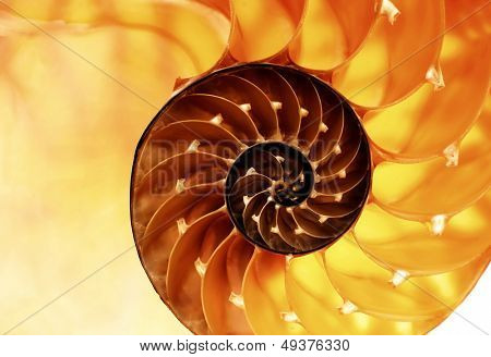 nautilus shell section as background