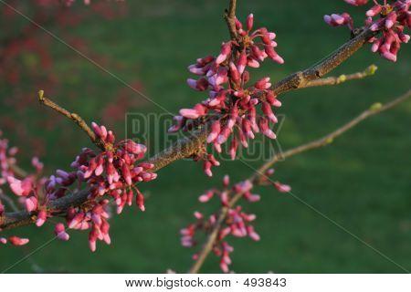 Redbud Branch