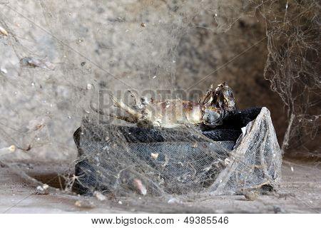 Dead creature behind spider net