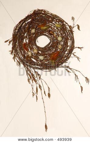 Quail Nest 1