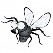 image of gnats  - funny fly - JPG