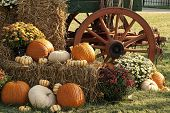 stock photo of wagon wheel  - This is a old antique wagon and fall display of pumpkins - JPG