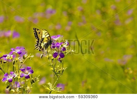 Butterfly, texture