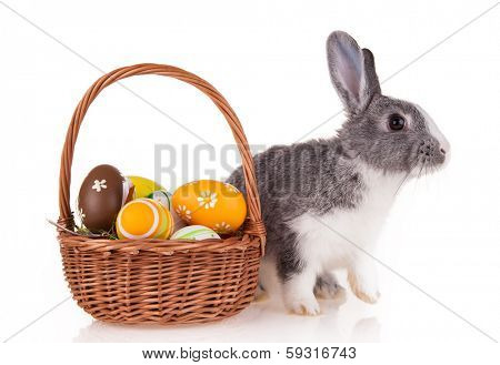 Studio shot of domestic rabbit on white background