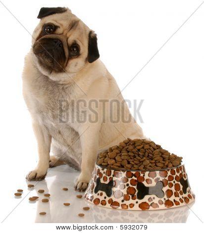 Pug Sitting At Food Dish