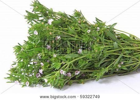 Garden Savory