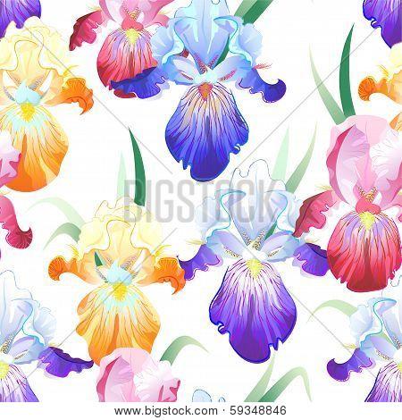 White seamless pattern with Iris flowers