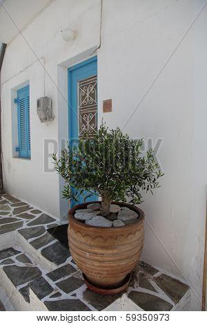 Olive Wood On Paros Island