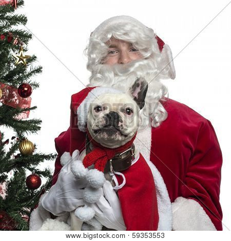 Close-up of Santa Claus holding a French Bulldog, isolated on white