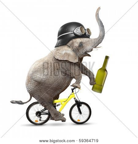 Drunken driver riding a bike. Traffic safety and insurance concept.