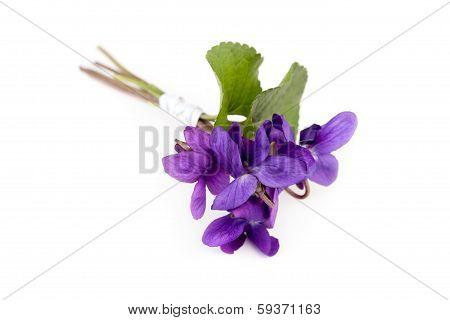 Viola Bouquet ( Viola Reichenbachiana )