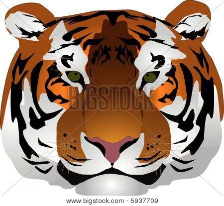 Head Tiger