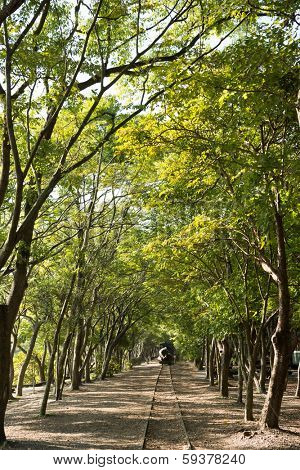 Forest with railroad, shot at Luodong Forestry Culture Garden, Yilan, Taiwan, Asia.