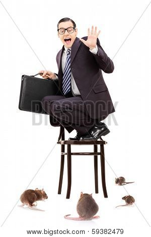 Terrified young businessman standing on chair in the middle of rat invasion isolated on white background