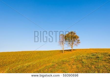 Tree On Hill With Blue Sky