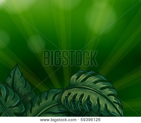 Illustration of the leaves with green rays