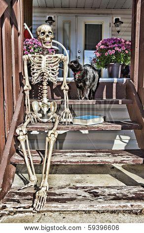 Backstep Skeleton & Black Cat