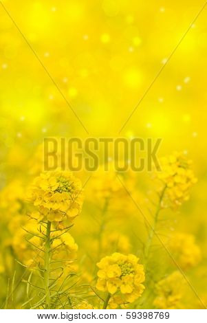 Yellow Flowers On A Bokeh Background