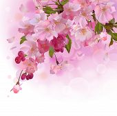 stock photo of sakura  - Vector spring background with gentle  branch of  beautiful flowers - JPG