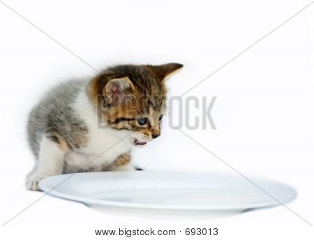 Isolated Kitten