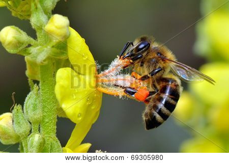 bee on yellow flower in summer