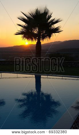 Palm Tree Silhouettein An Aegean Sunrise