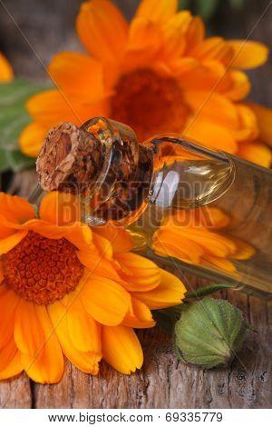 Calendula Tincture In Glass Bottle Macro Vertical