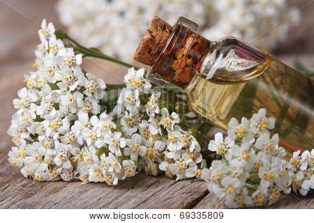 Yarrow Oil In The Bottle Close-up Horizontal