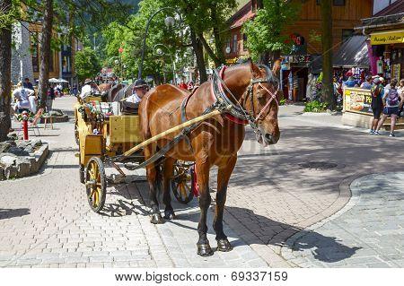 Horse At Krupowki Street In Zakopane