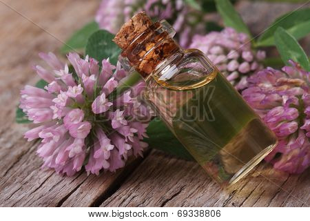 Clover  Tincture In A Bottle Nd Flowers Macro Horizontal