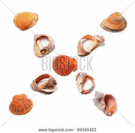 Letter X Composed Of Seashells