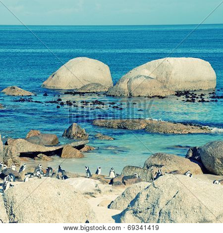Beach Of Atlantic Ocean (South Africa) With African Penguins