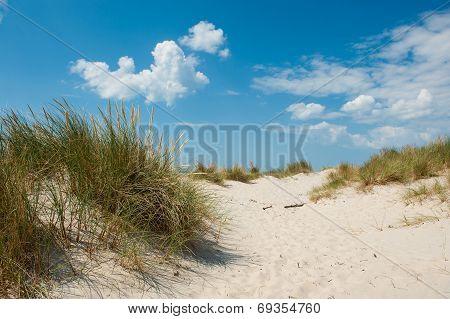 Danish Coast