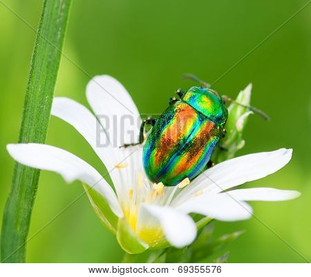 Colored Bug Sits On A Flower
