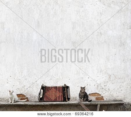 accordion and two cats