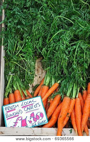 Carrots with green tops.